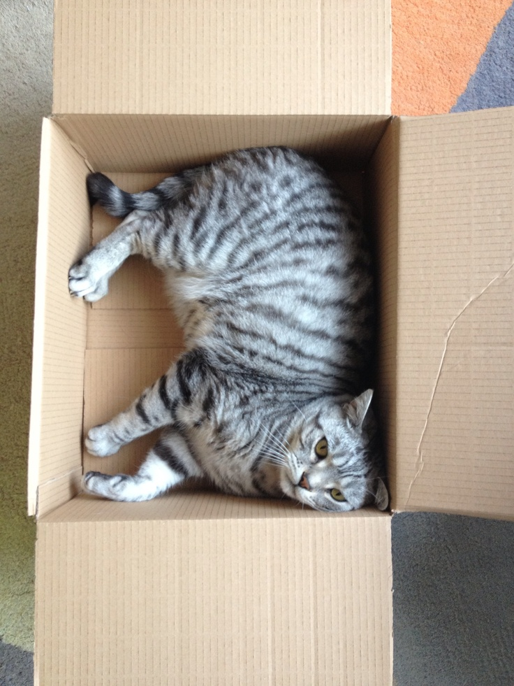Find me a box & I'm there!