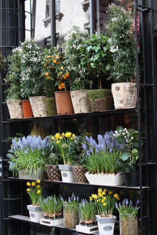 RL Photography flower shops of Europe