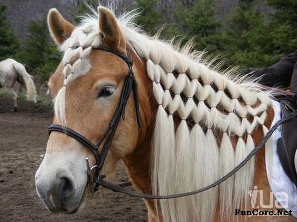 Horse Mane Styles Horses Pinterest Horse Hair Styles