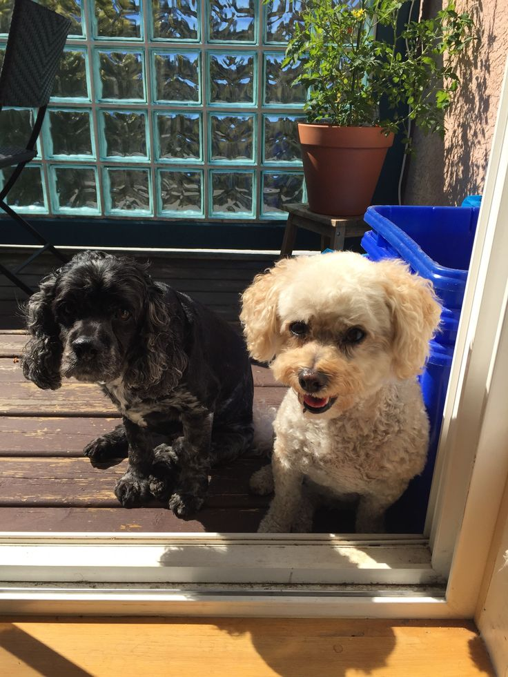 Max and Sophie sunning!