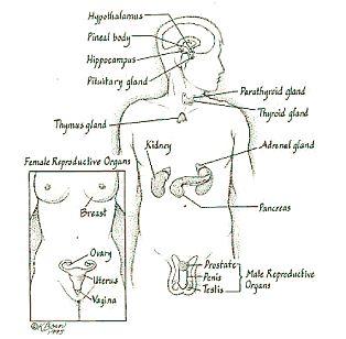 61 best Nursing (Endocrine System) images on Pinterest