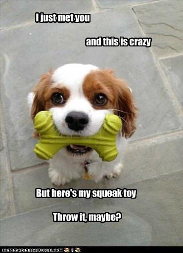 <3: Dogs Quote, King Charles, Cars Rae Jepsen, Funny Pictures, Funny Animal, Funny Dogs Pictures, Funny Puppies, Animal Memes, Blenheim Spaniels