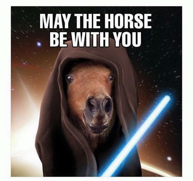May The Fourth Be With You Treats: Horse Quotes & Funnies