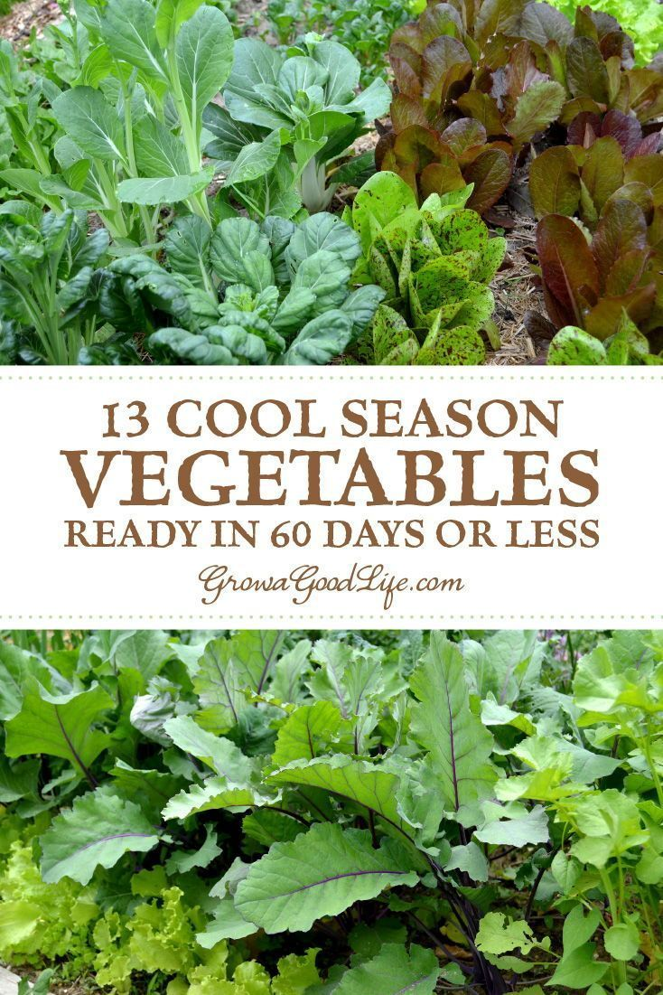 13 Quick Growing Vegetables For Your Fall Garden In 2020 Fall