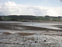Wandering (+ dog), 2nd May, morning (but public Wanders don't venture onto estuary mud re H & S, we stick to the view from a seat!). If it wasnae for your wellies, eh?:)