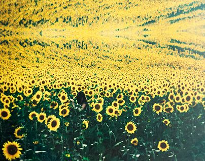 """Check out new work on my @Behance portfolio: """"Helianthus"""" http://be.net/gallery/33810238/Helianthus"""