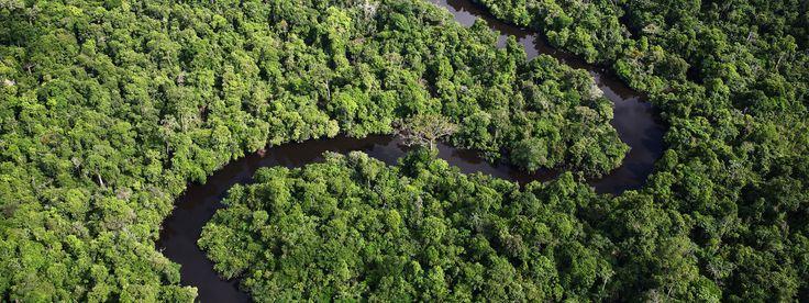 Protect the Amazon.