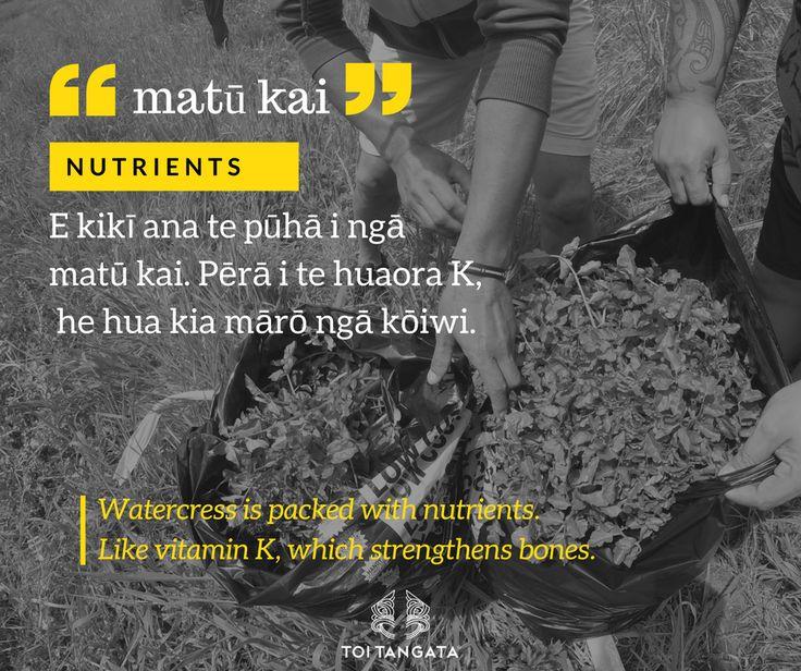 What's the hoo-ha about pūhā? Matū kai and huaora K. Kupu o te wiki. #toitangata #kupuotewiki #pūhā #wordoftheweek #tereo #Māori #matūkai #huaora #toitekupu #watercress #homegrown #kai #getinmyboilup