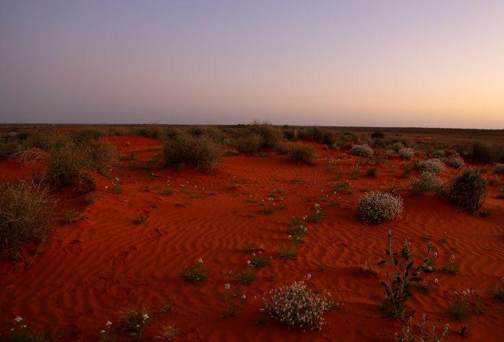 Sturt Desert Dune