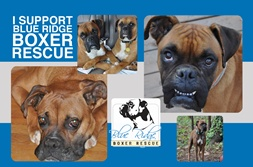 Blue Ridge Boxer Rescue is partnering with Aquavation and is ready to take your orders! You make your custom water bottle and they receive a donation each time.