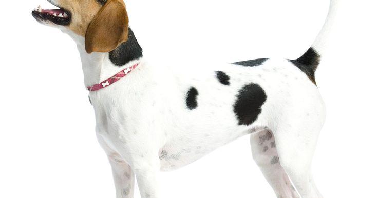 Como curar soluços de cachorros. Soluços de cachorro, como os soluços nos humanos, são espasmos do diafragma. Tanto em cães como em humanos, os soluços são inofensivos, mas podem ser irritantes. Os filhotes são particularmente mais propensos a sofrer disso, pois seus órgãos estão em rápido crescimento. Os soluços acabam desaparecendo sozinhos, em algum momento, após alguns ...
