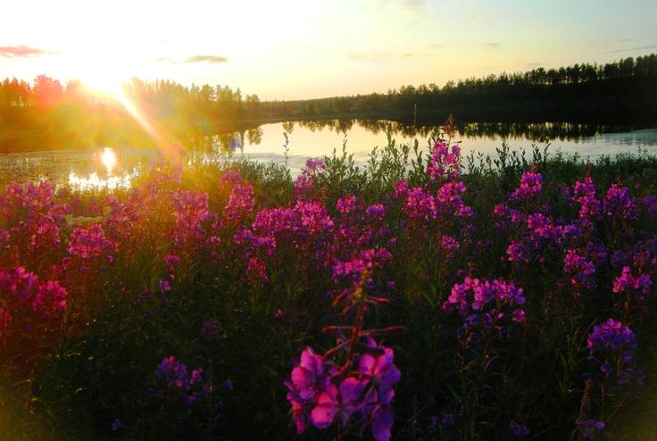 Lapland, Sweden. Midnight sun.