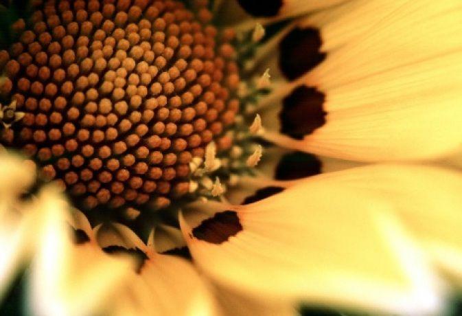 Makrofotografering: Få det minsta att bli stort nog | Kamera & Bild