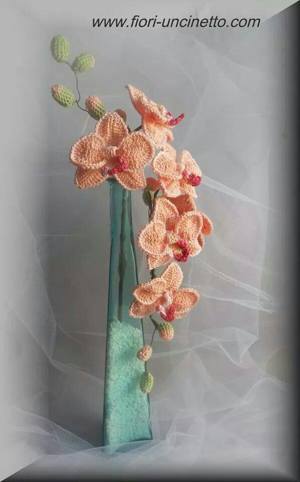 Orchidea                                                       …