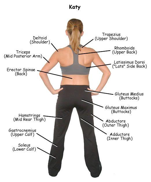 Back muscles | Fitness | Pinterest