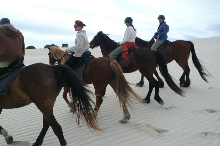 Experience the beautiful coastline of Hermanus on Horseback