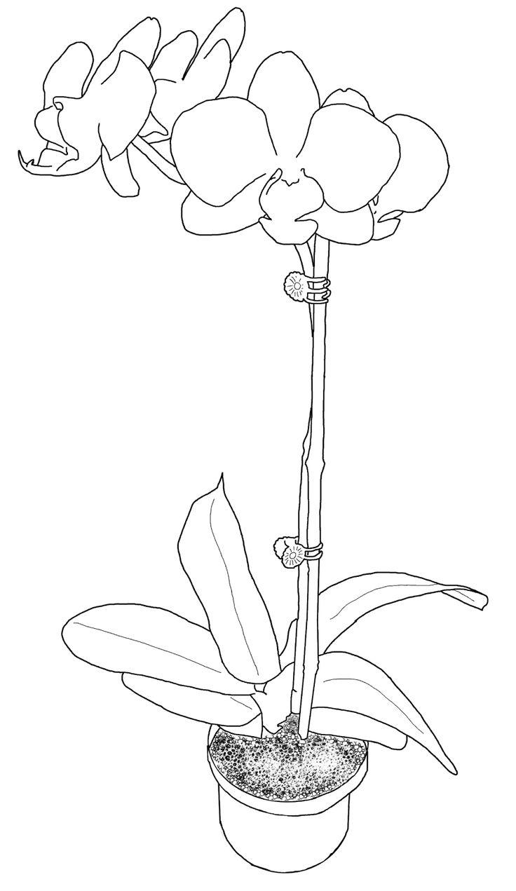 inspirierend orchideen malvorlagen kostenlos  top