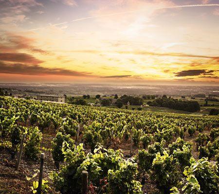 Rhone Weine der besten Appellationen bei Vinatis online bestellen.