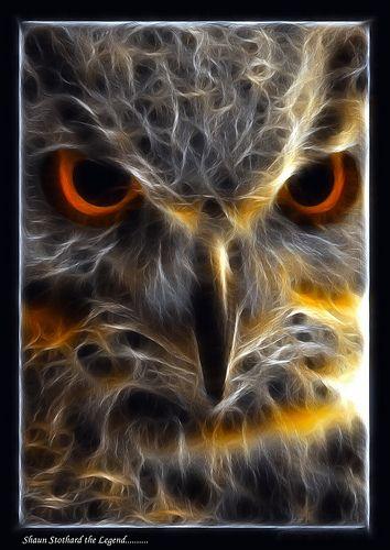 fractalius owl...