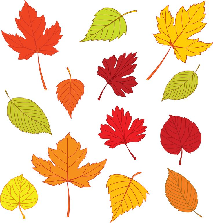 Best Leaf Templates Images On   Leaf Template Leaves