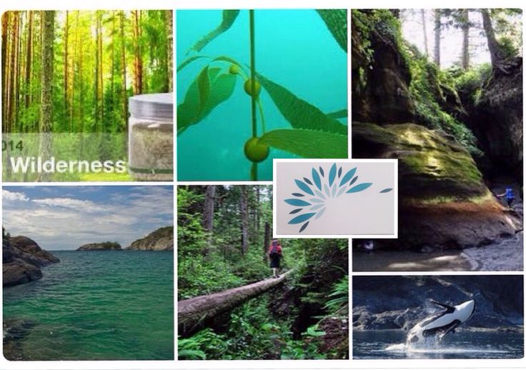 We love nature and intertwine it in all we do #naturalisbest http://www.soulfulindulgence.com - new website coming soon!!! #mobilesp #onsitespa #spavancouver #vancouver #surrey#whiterock#langley#burnaby great choice to #workplacewellness #wellnessintheworkplace #corporatewellness #yvr