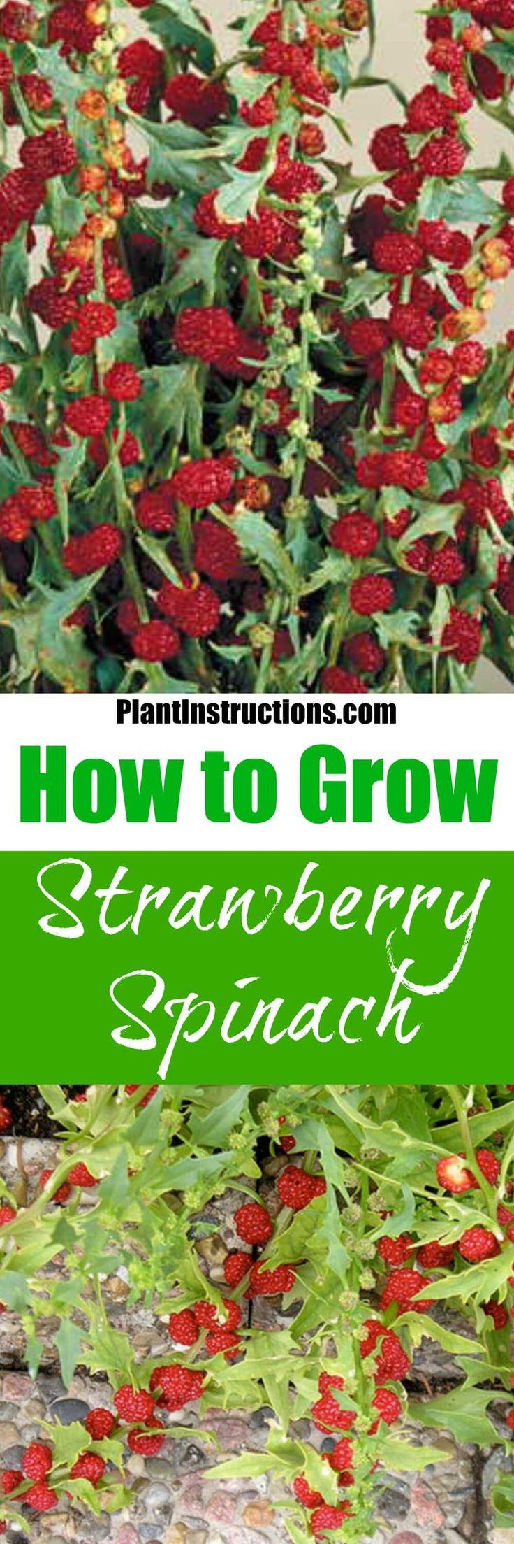 Best Strawberry Blonde Hair Color Shades: Best 20+ Grow Strawberries Ideas On Pinterest