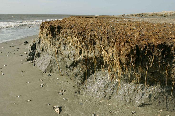 Erosione costiera: dal 1980 divorati milioni di metri di spiaggia - http://blog.rodigarganico.info/2016/ambiente/erosione-costiera-dal-1980-divorati-milioni-metri-spiaggia/