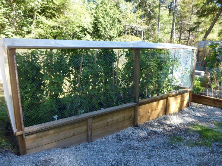 Our Tomato Pictures - www.rascalandcrowfarm.com