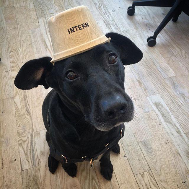 Interns at WeWork Berkeley are important too. From @kodakinthecity #dogsofWeWork