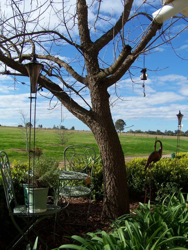 Hunter Valley vineyards Plants