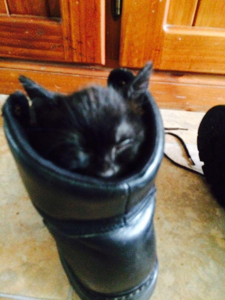 Prada- Puss in Boots