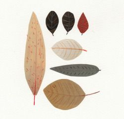 "marionbeeck: ""© marion beeck - herbarium I """