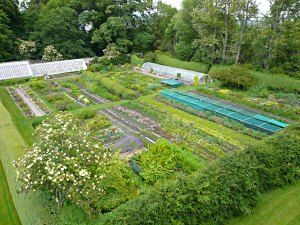 Let's see if we can get a special tour of my favorite herb nursery, Poyntzfield, on the Black Isle, Scotland