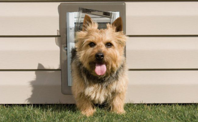 Top 10: Best Dog Door (for Walls and Doors)