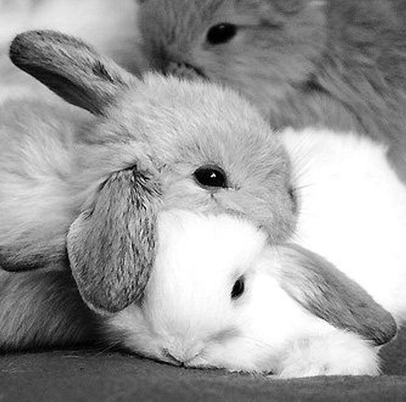 Bunnies are cute but dangerous. First you have one, what's the harm? Then you have two, well why not? Then you have three, because what one more at this point...Before you know it, you work for them.