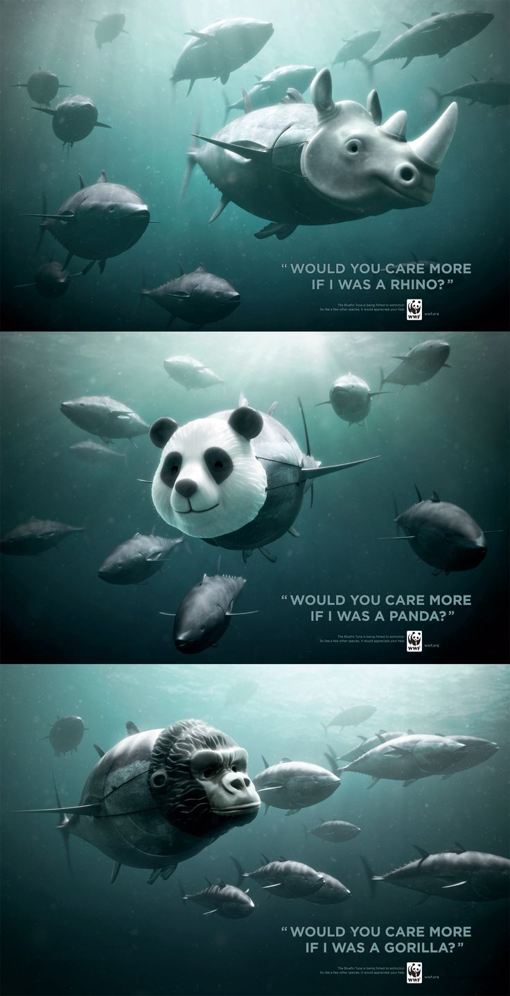 """WOULD YOU CARE MORE IF I WAS A RHINO?"" • ""WOULD YOU CARE MORE IF I WAS A PANDA?"" • ""WOULD YOU CARE MORE IF I WAS A GORILLA?"" The Bluefin Tuna is being fished to extinction. So like a few other species it would appreciate your help. World Wildlife Fund • http://www.worldwildlife.org"