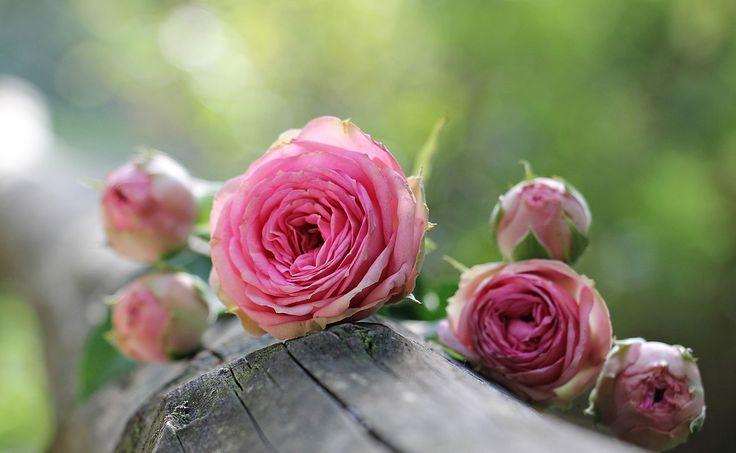 Vágott virágok - SparVirág Eger