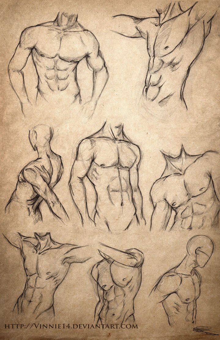 Male Body Sketches by Vinnie14 on @DeviantArt