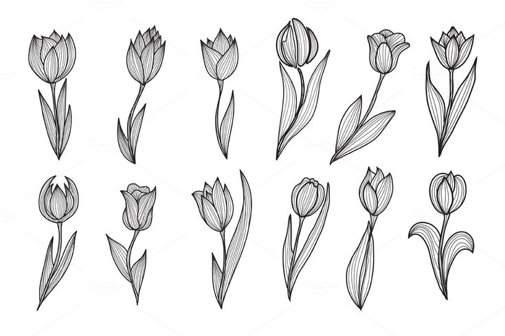 Roses and Tulips Set by Chantall on @creativemarket