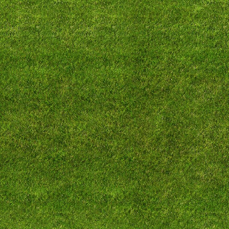 grass texture seamless 1