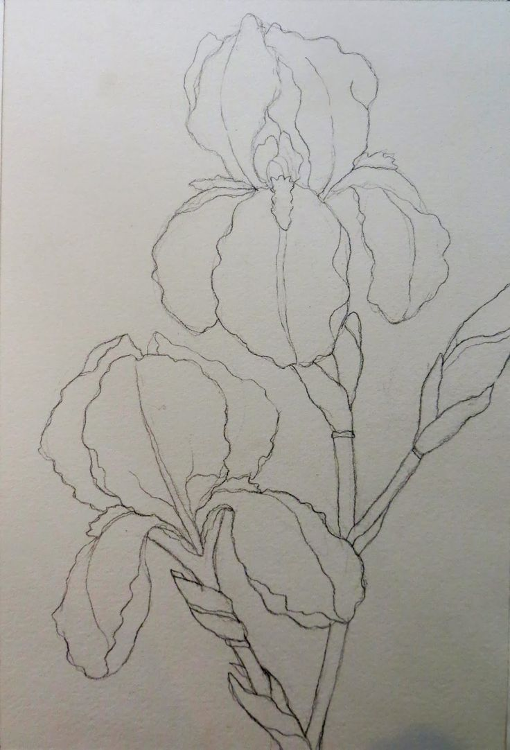 Drawing And Painting Purple Irises Can Be A Challenge! It Is Also A Great  Opportunity