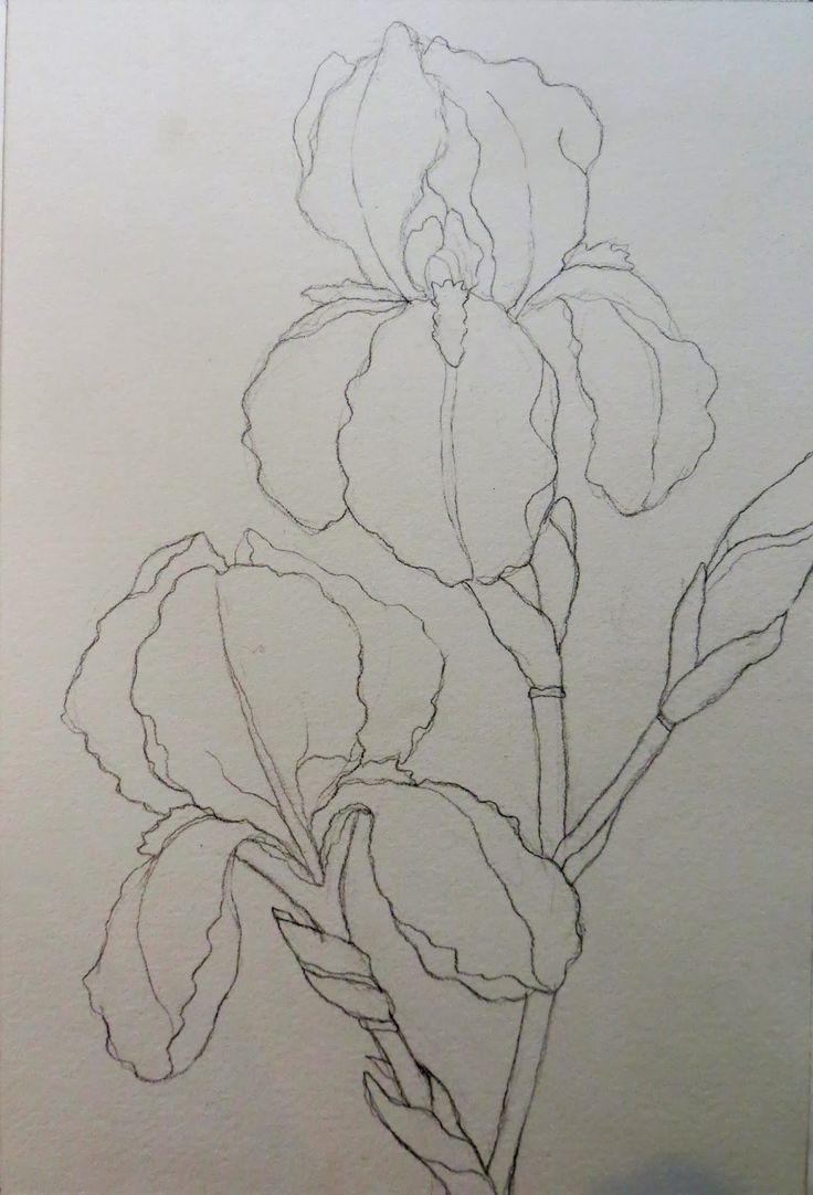 ¡El dibujar y pintar iris púrpuras puede ser un desafío! También es una gran oportunidad para dibujar estas formas intrincadas, ondulantes, y para crear algunas hermosas violetas y púrpuras, a través de la mezcla y mezcla en el papel. Utilizaremos una gama de colores para obtener temperaturas frescas y cálidas, de modo que estos iris brillarán con calor. Para este proyecto, necesitará los siguientes pigmentos de acuarela (o algo parecido a él): Quinacridone Rose (o Permanente), Quinacridone…