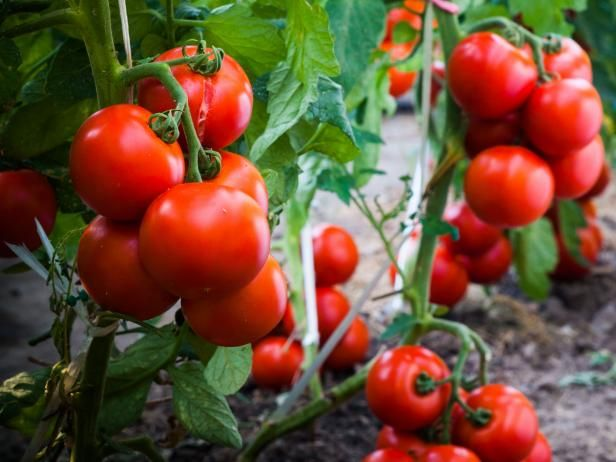 How Far Apart Should Tomatoes Be Planted Tomato Garden Growing Vegetables Easy Vegetables To Grow
