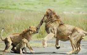 Lion Sanctuaries in Telangana, India @ Sanctuariesindia.com