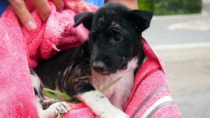 Sadly in Bali, huge numbers of new born puppies are thrown away and left to die every day. See Sasha's story...