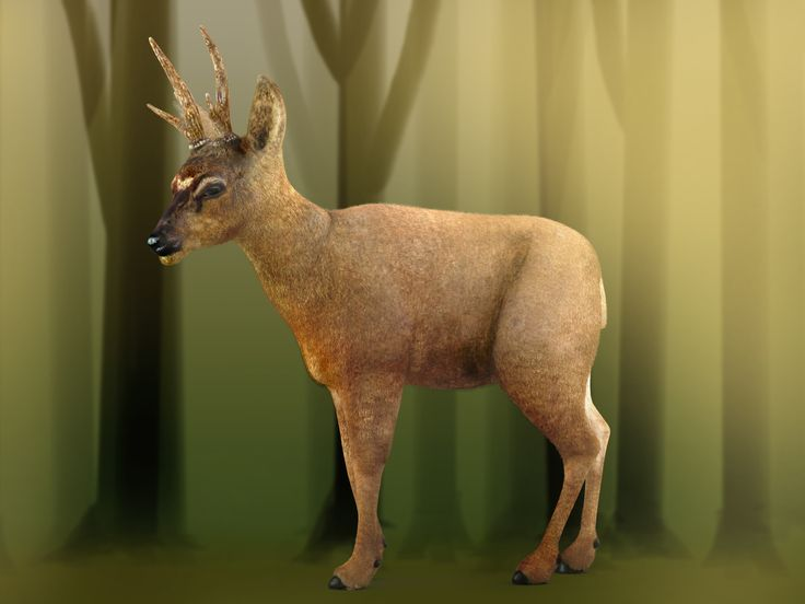 Hippocamelus bisulcus (Chilean deer), René Olivares on ArtStation at https://www.artstation.com/artwork/nVzdo