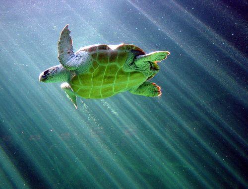 Sea turtles :)