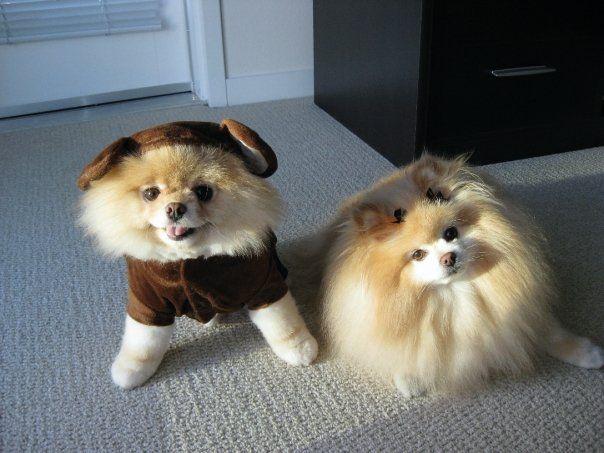 with buddy!