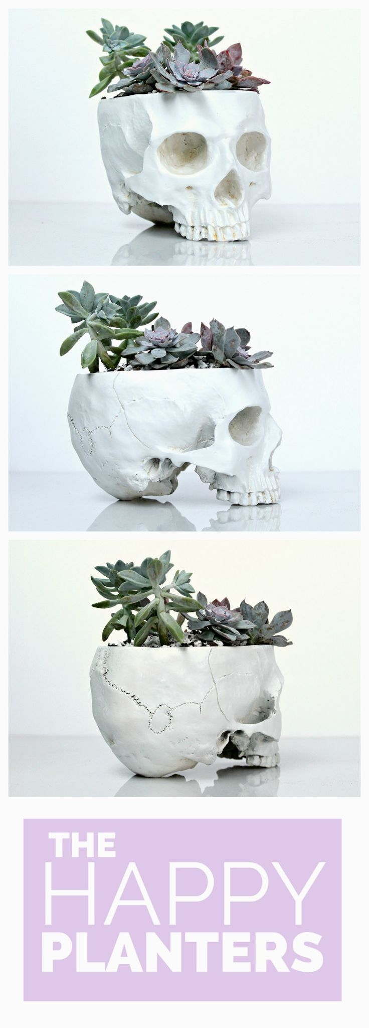 Bohemian, modern skull planters. Large size skulls with space for 4 to 6 succulents. Get the Skull planter by itself or with the Succulents Kit to plant at home