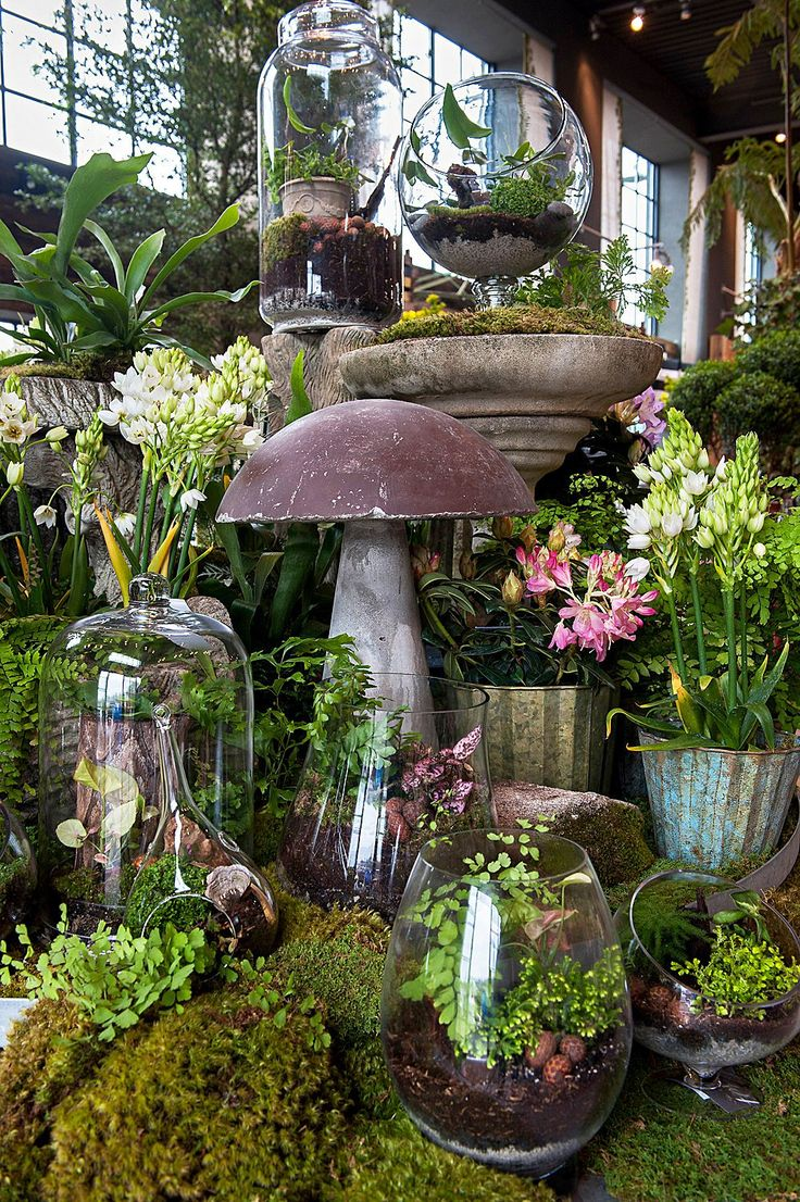best pflanzen images on pinterest succulents landscaping and